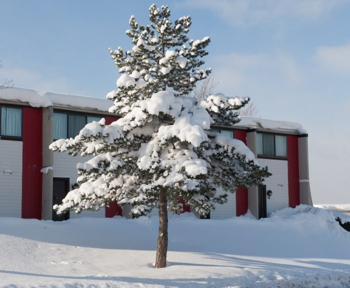 An evergreen tree on South Campus is covered in snow.